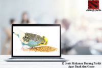 Makanan-Burung-Parkit-Agar-Jinak
