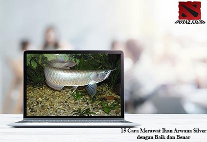 Cara-Merawat-Ikan-Arwana-Silver