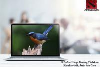 Harga-Burung-Tledekan